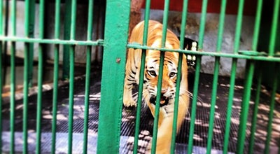 Photo of Zoo Trivandrum Zoo at Museum, Trivandrum 695033, India