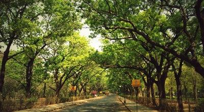 Photo of Park Cubbon Park at M G Road, Bangalore, India