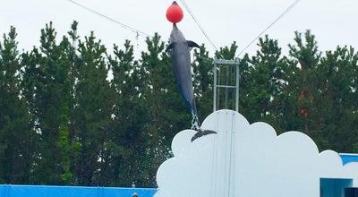 Photo of Aquarium ドルフィンスタジアム at 西船見町5932-445, 新潟市中央区 951-8555, Japan