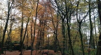 Photo of Park Eversten Holz at Meinardusstraße, Oldenburg (Oldenburg) 26122, Germany
