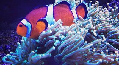Photo of Aquarium Океанаріум «Морська казка» at Вул. Малишка, 3, Київ, Ukraine