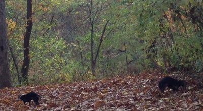 Photo of Trail Forest Park, 112th Street Trailhead at Park Lane South, Woodhaven, NY 11418, United States