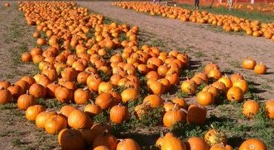 Photo of Farm G&M Farms Corn Maze & Pumpkin Patch at 487 E Airway Blvd, Livermore, CA 94551, United States
