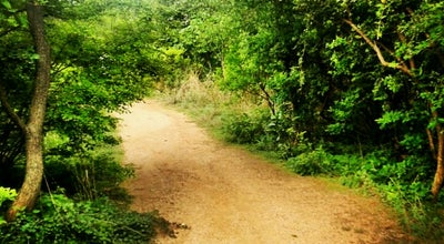 Photo of Park KBR Park at Kbr National Park, Hyderabad, India