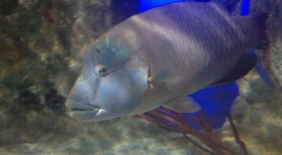 Photo of Aquarium Sea Life at Centre Commercial Régional Val D'europe, Serris 77700, France