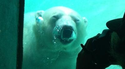 Photo of Zoo Polar Bear Exhibit at Toronto, ON M1X 1L3, Canada
