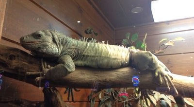 Photo of Wings Joint Winking Lizard Tavern at 9570 Mentor Ave, Mentor, OH 44060, United States