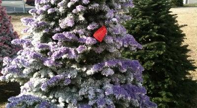 Photo of Park Christmas Tree Farm at 1955 S Waterman Ave, San Bernardino, CA 92408, United States