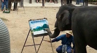 Photo of Zoo ปางช้างแม่สา (Maesa Elephant Camp) at ทางหลวงแผ่นดินหมายเลข 1096, Mae Rim 50180, Thailand