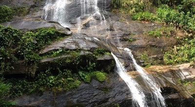 Photo of Forest Floresta da Tijuca at Rio de Janeiro, Brazil