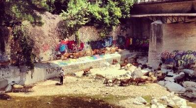 Photo of Cafe Κήπος at Κοσυνθος, Ξάνθη 671 00, Greece