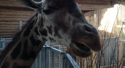 Photo of Zoo Žirafu māja at Meza Prospekts 1, Riga LV-1014, Latvia