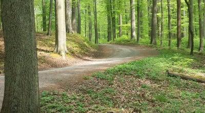 Photo of Trail Zoniënwoud looproute at Chaussée De Wavre 2057, Oudergem 1160, Belgium