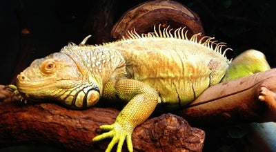 Photo of Zoo Oslo Reptilpark at St. Olavs Gate 2, Oslo 0165, Norway