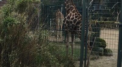 Photo of Arts and Entertainment Giraffenhaus Zoo Dortmund at Dortmund, Germany