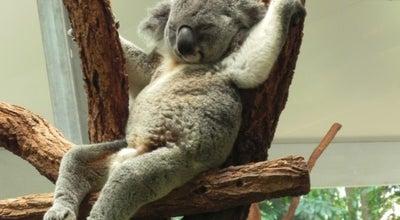 Photo of Zoo Lone Pine Koala Sanctuary at 708 Jesmond Rd., Fig Tree Pocket, QL 4069, Australia