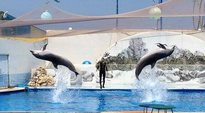 Photo of Zoo Дельфинарий at Корнилова Наб., 2, Севастополь 99011, Ukraine