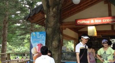 Photo of Cafe 남이섬 더 카페 at 춘천시, South Korea