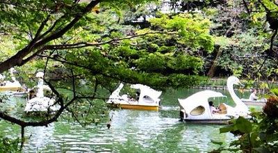 Photo of Lake 井の頭池 at 井の頭4-1, 三鷹市 181-0001, Japan