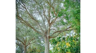 Photo of Park Shenandoah Park at 14601 Sw 14th St, Plantation, FL 33325, United States