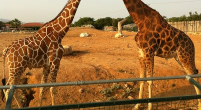 Photo of Zoo Αττικό Ζωολογικό Πάρκο (Attica Zoological Park) at Αγίου Δημητρίου, Σπάτα 190 04, Greece