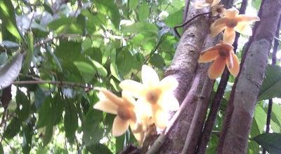 Photo of Trail Hutan Lipur at Malaysia