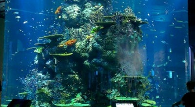 Photo of History Museum Maritime Experiential Museum & Aquarium (MEMA) at Resorts World Sentosa, Sentosa Island 098269, Singapore