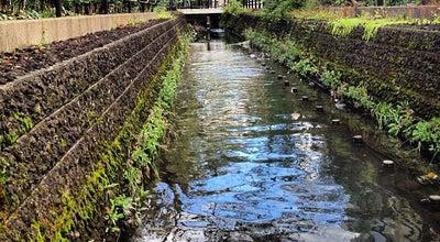 Photo of Trail 二ヶ領用水 at 多摩区/幸区, 川崎市, Japan