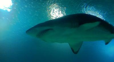 Photo of Theme Park Oceanos tiburones at Spain