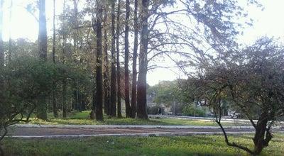 Photo of Park Bosque das Grevíleas at Av. Pio Xii, Maringá 87015-325, Brazil