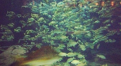 Photo of Arts and Entertainment Snorkel the Ruins @ Atlantis at Atlantis Resort & Casino, Nassau, Bahamas, Bahamas