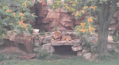 Photo of Zoo Big Cat Country at Stl Zoo, St Louis, MO 63110, United States