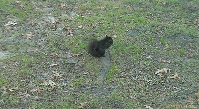 Photo of Park Turnure Park at 26 Lake St, White Plains, NY 10601, United States