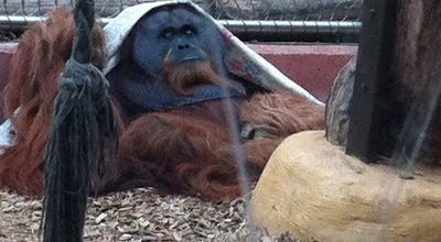 Photo of Zoo Zoo Dortmund at Mergelteichstr. 80, Dortmund 44225, Germany