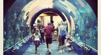 Photo of Aquarium Audubon Aquarium of the Americas at 1 Canal St, New Orleans, LA 70130, United States