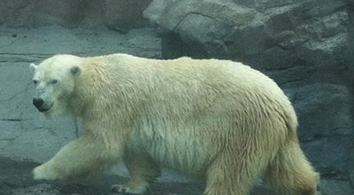 Photo of Zoo Bear Canyon (Omaha's Henry Doorly Zoo) at 3701 S 10th St, Omaha, NE 68107, United States