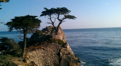 Photo of Tree The Lone Cypress at 17-mile Drive, Pebble Beach, CA 93953, United States