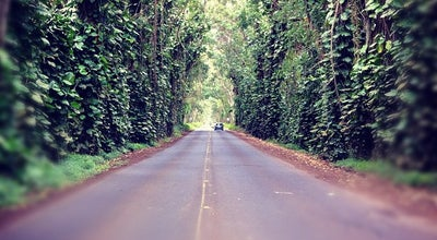 Photo of Scenic Lookout Tunnel Of Trees at 21 Greentree Dr., Kalaheo, HI 96756, United States