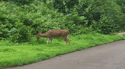 Photo of Park Sanjay Gandhi National Park at Western Express Highway, Mumbai 400 066, India