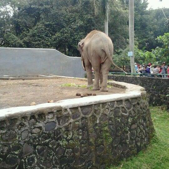 Photo taken at Kebun Binatang Ragunan by Ridwan M. on 4/29/2012
