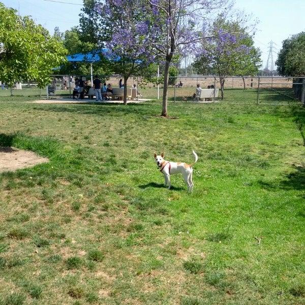 Dog Friendly Pasadena