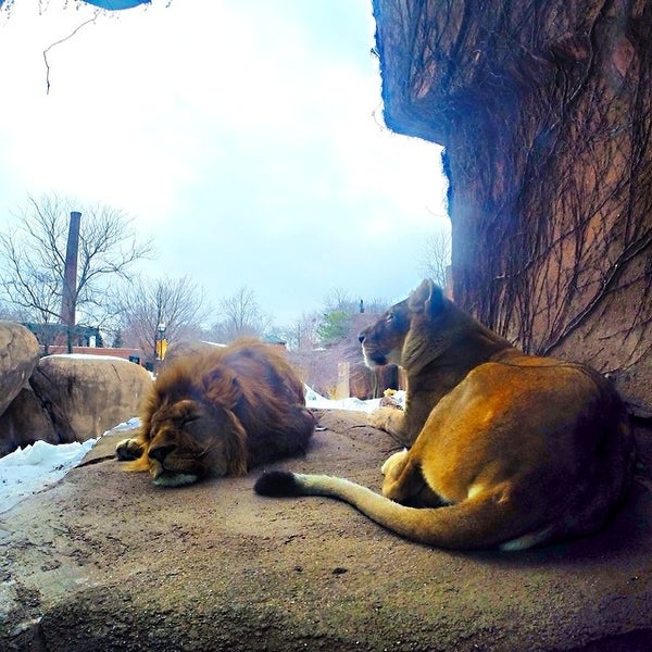 Photo taken at Lincoln Park Zoo by Francisco B. on 2/22/2014