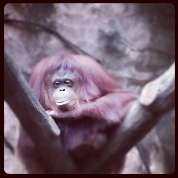 Photo taken at Kebun Binatang Ragunan by nugie w. on 11/15/2012