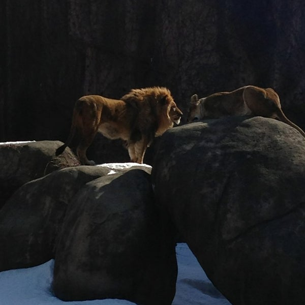 Photo taken at Lincoln Park Zoo by Louis P. on 2/23/2014