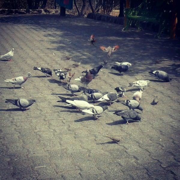 Photo taken at Parque Ecologico Huayamilpas by Vane on 5/10/2013