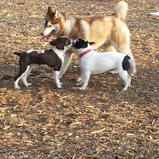 Photo taken at Cunningham Park Dog Run by Susie C. on 4/21/2014