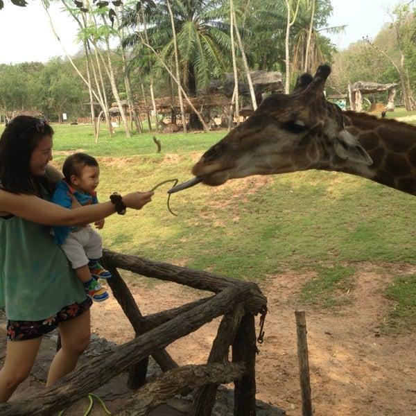 Photo taken at สวนสัตว์เปิดเขาเขียว (Khao Kheow Open Zoo) by YAI (^_^) S. on 2/2/2013