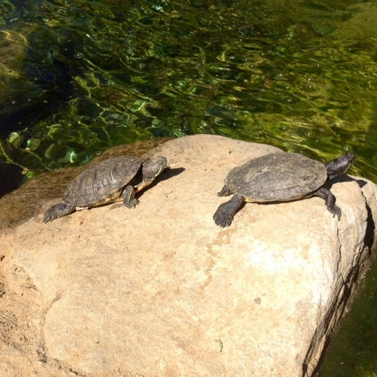 The Turtle Pond Miracle Mile 8 Tips
