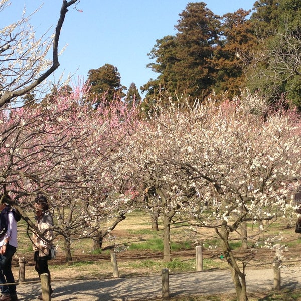Photo taken at 偕楽橋 by Takahisa I. on 3/16/2013