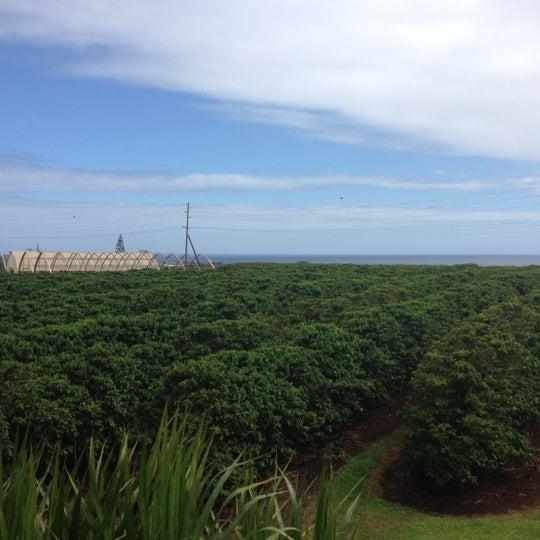 Kauai Coffee Farm Tour